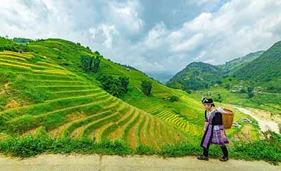 Village et rizière en terrasse du Tonkin