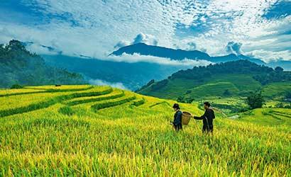 Le Vietnam du Nord au Centre