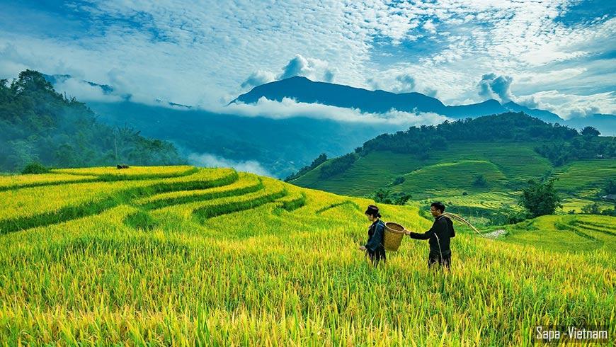 Sapa-vietnam-recolte-riz-870