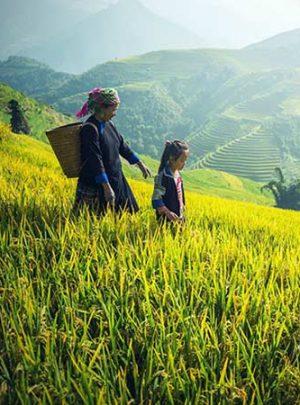 Circuit trek randonnée au Vietnam