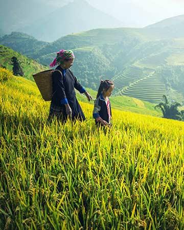 Randonnée et trek au Vietnam