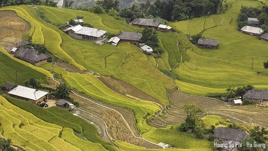 Rizière en étage – Hoang Su Phi