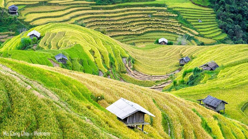 Rizière en récolte Mu Cang Chai Nord Vietnam