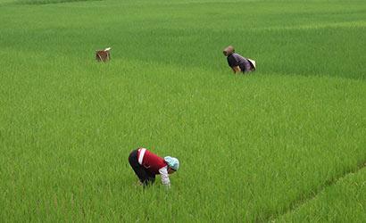 Au coeur du Vietnam rural et authentique 410 1
